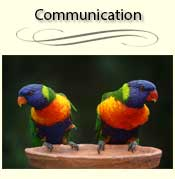 Birds Not Communicating